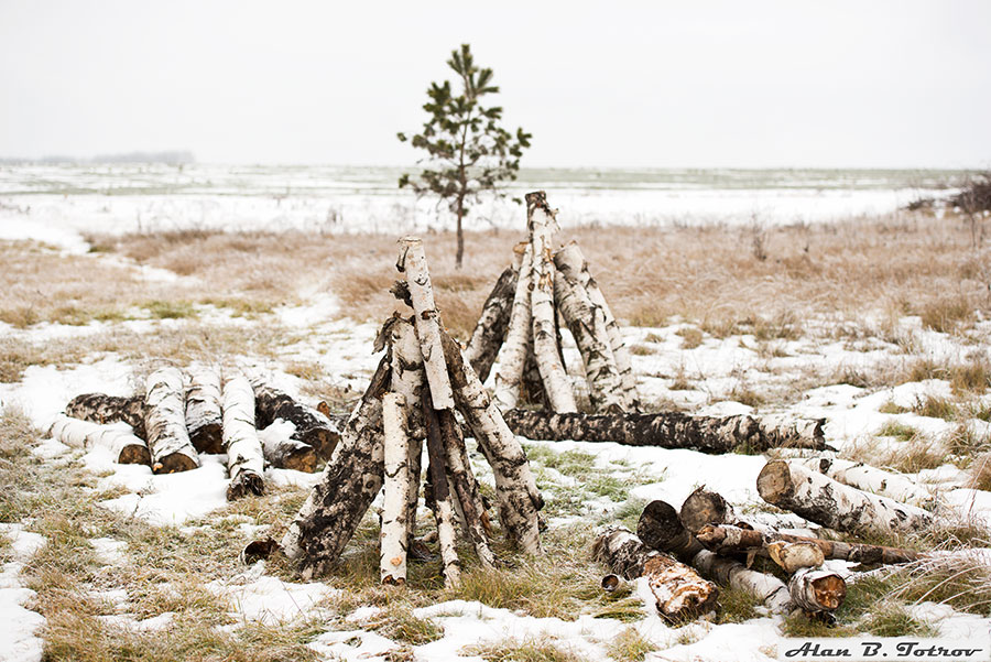 Берёзовые дрова (заготовки)