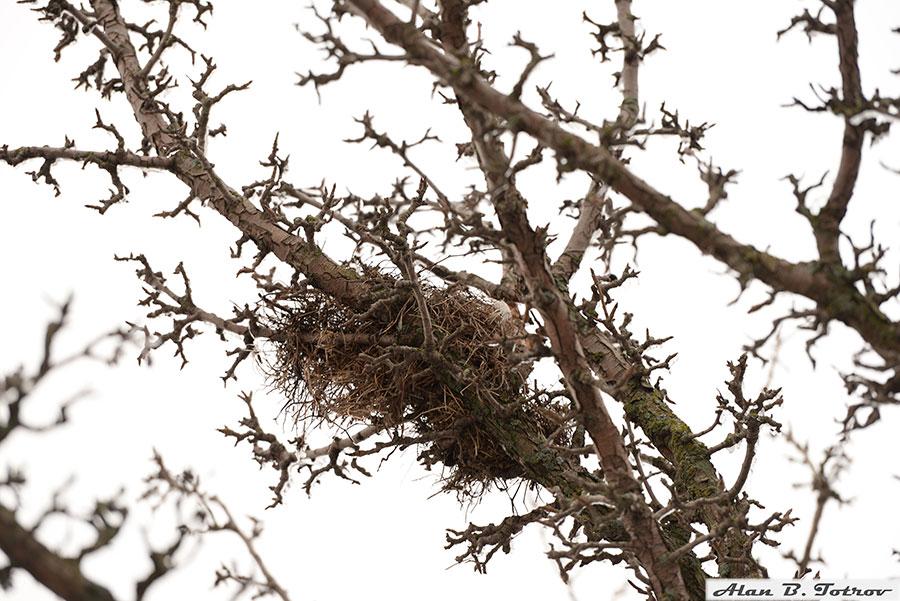 Заброшенное птичье гнездо