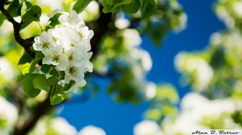 Картина маслом: цветущая груша