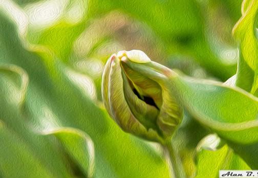 Картина маслом: тюльпан в цветении
