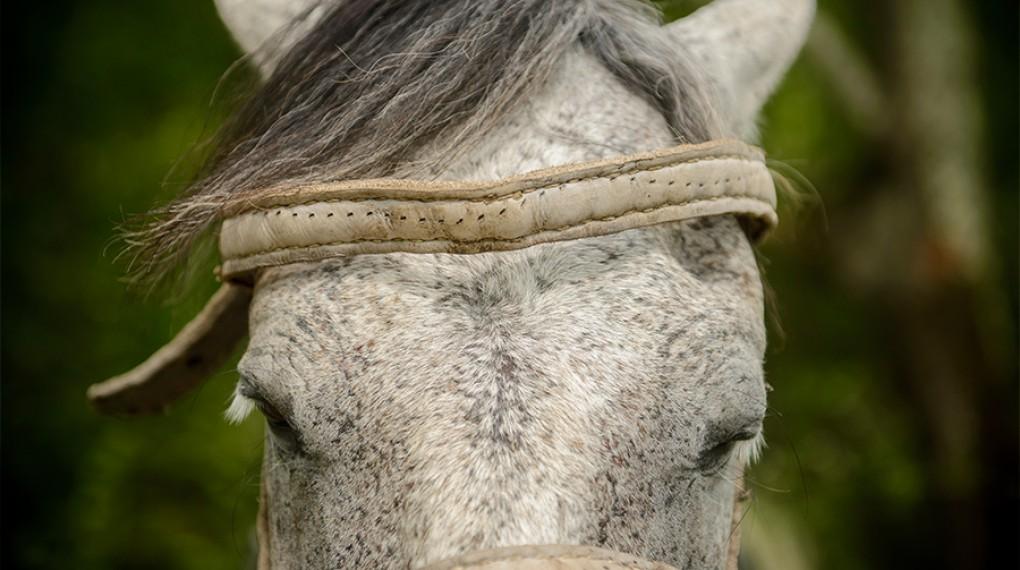 Старая лошадка-альбатрос