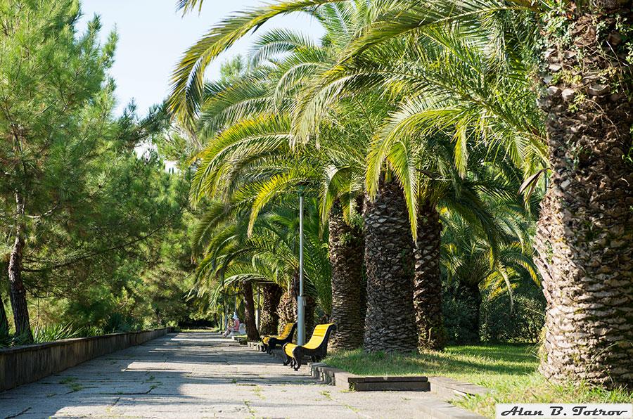 Сосново-пальмовая аллея