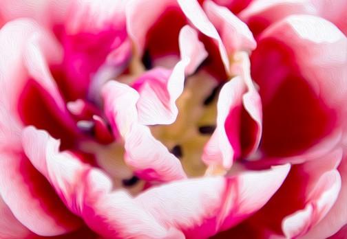 Картина маслом: розовый тюльпан