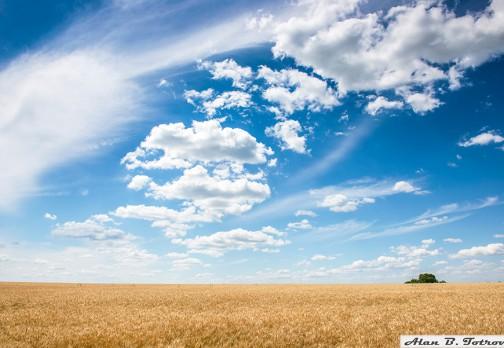 Пшеничное покрывало